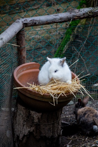 coniglietto bianco ciotola